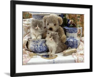 9-Week, Blue Bicolour Persian Kitten, Brindle Teddy Bear and Victorian Staffordshire Wash-Stand Set-Jane Burton-Framed Photographic Print