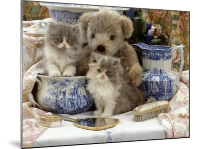 9-Week, Blue Bicolour Persian Kitten, Brindle Teddy Bear and Victorian Staffordshire Wash-Stand Set-Jane Burton-Mounted Photographic Print