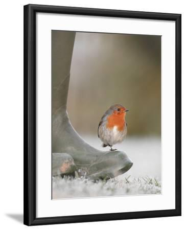 Robin Perched on Boot, UK-T^j^ Rich-Framed Photographic Print