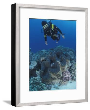 Diver and Giant Clam in Coral Reef, Great Barrier Reef, Australia-Jurgen Freund-Framed Photographic Print