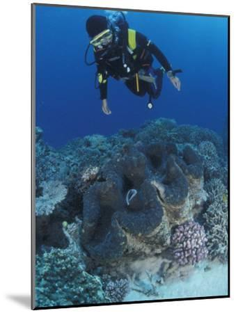 Diver and Giant Clam in Coral Reef, Great Barrier Reef, Australia-Jurgen Freund-Mounted Photographic Print