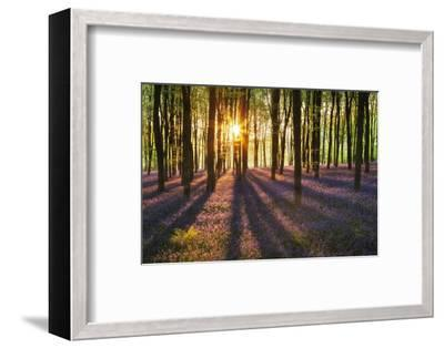 A Carpet of Bluebells (Endymion Nonscriptus) in Beech (Fagus Sylvatica) Woodland, Hampshire, UK-Guy Edwardes-Framed Photographic Print