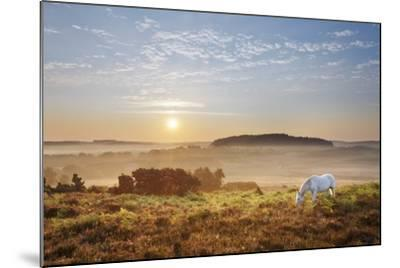 New Forest Pony Grazing on Latchmore Bottom at Dawn, the New Forest National Park, Hampshire, UK-Guy Edwardes-Mounted Photographic Print