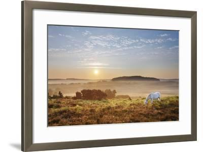 New Forest Pony Grazing on Latchmore Bottom at Dawn, the New Forest National Park, Hampshire, UK-Guy Edwardes-Framed Photographic Print