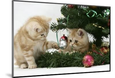 Two Ginger Kittens Playing with Decorations in a Christmas Tree-Mark Taylor-Mounted Photographic Print
