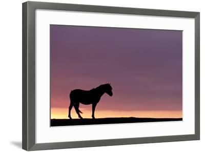 Silhouetted Dartmoor Pony (Equus Caballus) at Sunrise, Combestone Tor, Dartmoor Np, Devon, UK-Ross Hoddinott-Framed Photographic Print