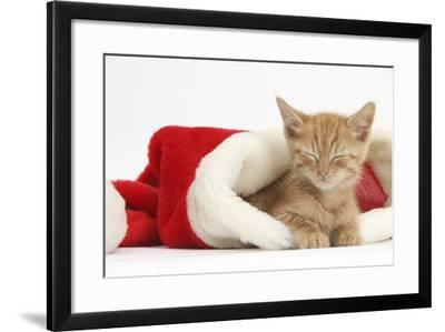Sleepy Ginger Kitten, 5 Weeks, in a Father Christmas Hat-Mark Taylor-Framed Photographic Print