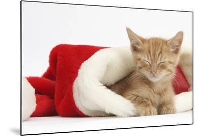 Sleepy Ginger Kitten, 5 Weeks, in a Father Christmas Hat-Mark Taylor-Mounted Photographic Print