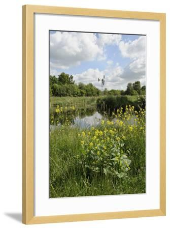 Wind Pump, Charlock (Sinapis Arvensis) Flowering in the Foreground, Wicken Fen, Cambridgeshire, UK-Terry Whittaker-Framed Photographic Print