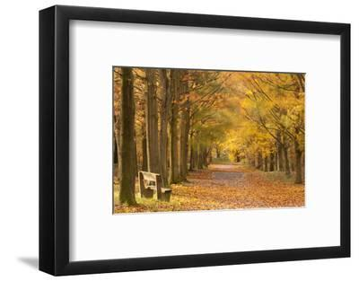 European Beech Trees in Autumn, Beacon Hill Country Park, the National Forest, Leicestershire, UK-Ross Hoddinott-Framed Photographic Print