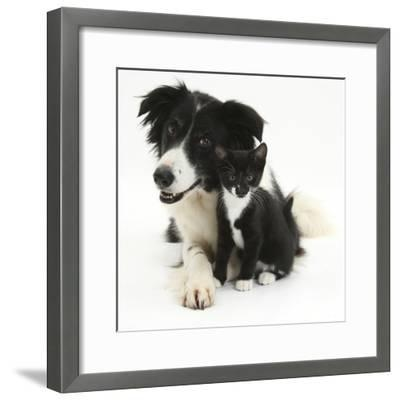 Black-And-White Border Collie Bitch, with Black-And-White Tuxedo Kitten, 10 Weeks-Mark Taylor-Framed Photographic Print