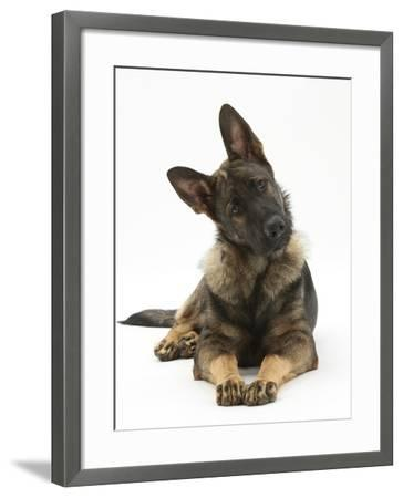 German Shepherd Dog Looking Inquisitively with Tilted Head-Mark Taylor-Framed Photographic Print