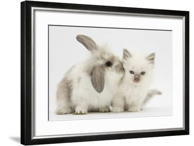 Young Windmill-Eared Rabbit and Matching Kitten-Mark Taylor-Framed Photographic Print