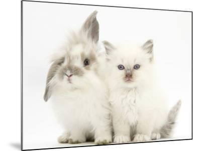 Young Windmill-Eared Rabbit and Matching Kitten-Mark Taylor-Mounted Photographic Print