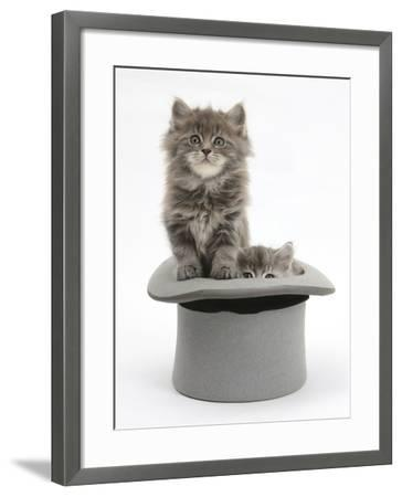 Two Maine Coon Kittens, 7 Weeks, in a Grey Top Hat-Mark Taylor-Framed Photographic Print