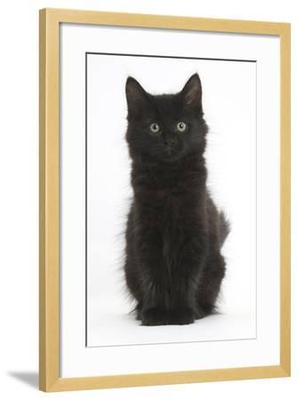 Fluffy Black Kitten, 9 Weeks Old, Sitting-Mark Taylor-Framed Photographic Print