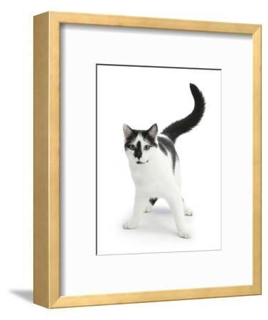 Black-And-White Cat, Pablo-Mark Taylor-Framed Photographic Print