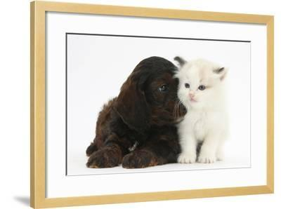 Cockerpoo Puppy and Ragdoll-Cross Kitten-Mark Taylor-Framed Photographic Print