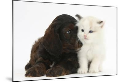 Cockerpoo Puppy and Ragdoll-Cross Kitten-Mark Taylor-Mounted Photographic Print