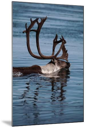 Caribou Migration-Staffan Widstrand-Mounted Photographic Print