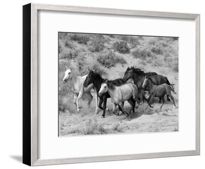 Group of Wild Horses, Cantering Across Sagebrush-Steppe, Adobe Town, Wyoming-Carol Walker-Framed Photographic Print
