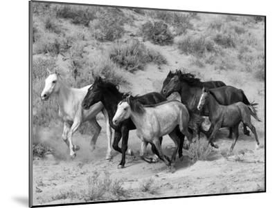Group of Wild Horses, Cantering Across Sagebrush-Steppe, Adobe Town, Wyoming-Carol Walker-Mounted Photographic Print