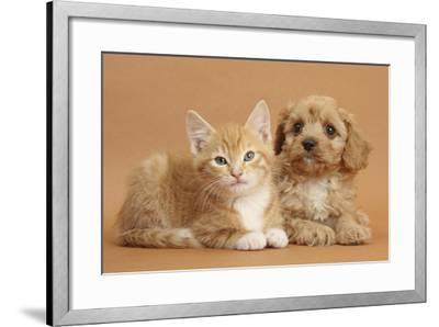 Cavapoo Puppy and Ginger Kitten-Mark Taylor-Framed Photographic Print