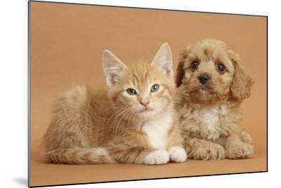 Cavapoo Puppy and Ginger Kitten-Mark Taylor-Mounted Photographic Print