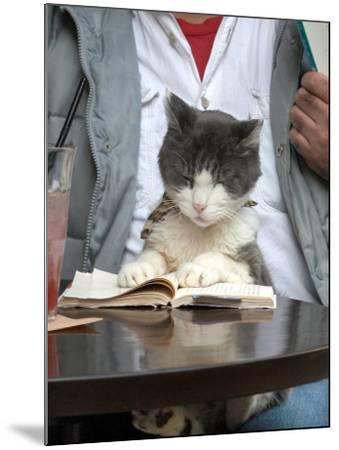 A Cat Joins its Owner Reading a Book at a Tokyo Cafe--Mounted Photographic Print