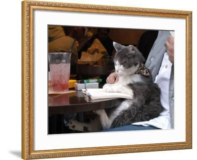 A Cat Joins its Owner Reading a Book at a Tokyo Cafe--Framed Photographic Print