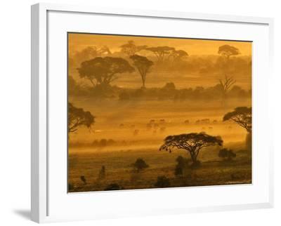 Herbivores at Sunrise, Amboseli Wildlife Reserve, Kenya-Vadim Ghirda-Framed Photographic Print