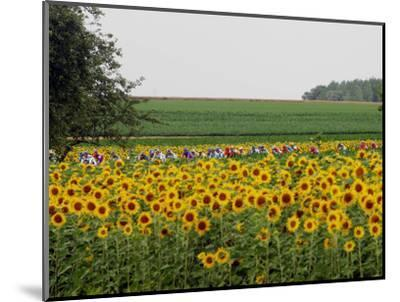 The Pack Rides Past a Sunflower Field During the Sixth Stage of the Tour De France--Mounted Photographic Print