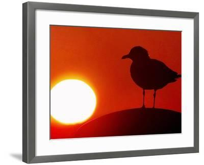 A Gull Perches on a Concrete Piling at Cleveland's North Coast Harbor--Framed Photographic Print