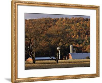 Fall Colors and a Field of Dried Soybeans in Pleasant Gap, Pennsylvania, October 20, 2006-Carolyn Kaster-Framed Photographic Print