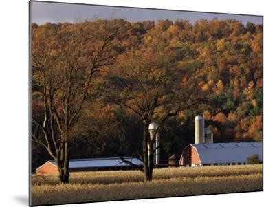Fall Colors and a Field of Dried Soybeans in Pleasant Gap, Pennsylvania, October 20, 2006-Carolyn Kaster-Mounted Photographic Print