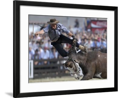 Gaucho, or Cowboy, is Thrown from a Horse as He Competes in a Rodeo in Montevideo--Framed Photographic Print