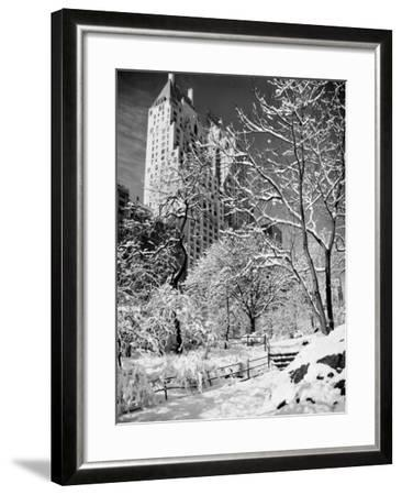 Snow-Covered Trees--Framed Photographic Print