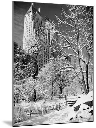 Snow-Covered Trees--Mounted Photographic Print
