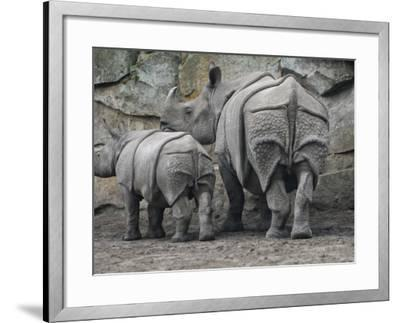 Rhinoceros and Her Youngster Hang Out in their Outdoor Enclosure at the Tierpark in Berlin--Framed Photographic Print