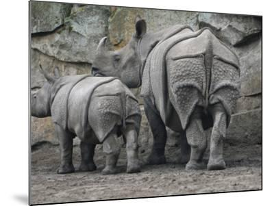 Rhinoceros and Her Youngster Hang Out in their Outdoor Enclosure at the Tierpark in Berlin--Mounted Photographic Print