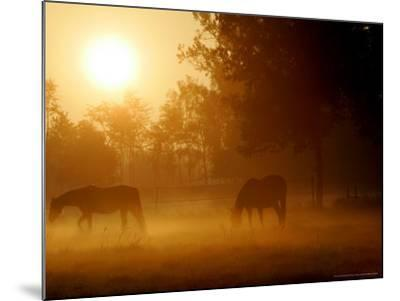 Horses Graze in a Meadow in Early Morning Fog in Langenhagen Near Hanover, Germany, Oct 17, 2006-Kai-uwe Knoth-Mounted Photographic Print