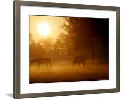 Horses Graze in a Meadow in Early Morning Fog in Langenhagen Near Hanover, Germany, Oct 17, 2006-Kai-uwe Knoth-Framed Photographic Print