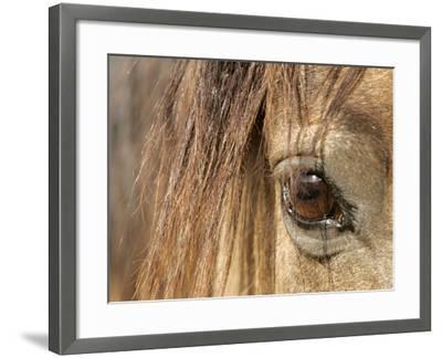 APTOPIX Mustangs Savior-Ann Heisenfelt-Framed Photographic Print