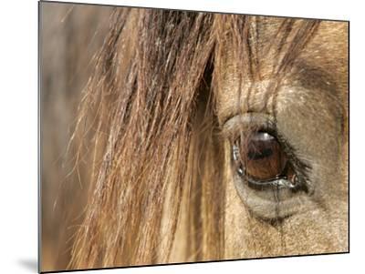 APTOPIX Mustangs Savior-Ann Heisenfelt-Mounted Photographic Print