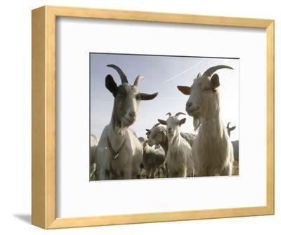 DEU BW Wetter Hirtenhund-Winfried Rothermel-Framed Photographic Print