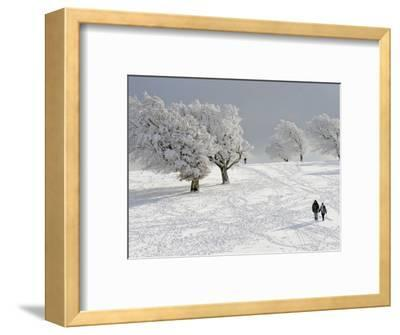 Strollers Passing Snow Covered Trees on the Mountain Schauinsland in the Black Forest , Germany--Framed Photographic Print