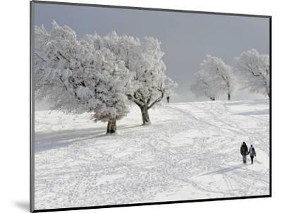 Strollers Passing Snow Covered Trees on the Mountain Schauinsland in the Black Forest , Germany--Mounted Photographic Print