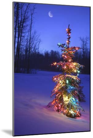 Christmas Tree--Mounted Photographic Print
