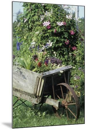 Vintage Wheelbarrow with Flowers--Mounted Photographic Print