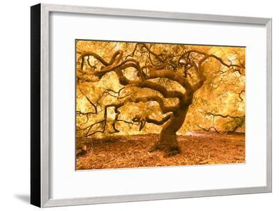 Japanese Maple 2-Moises Levy-Framed Photographic Print